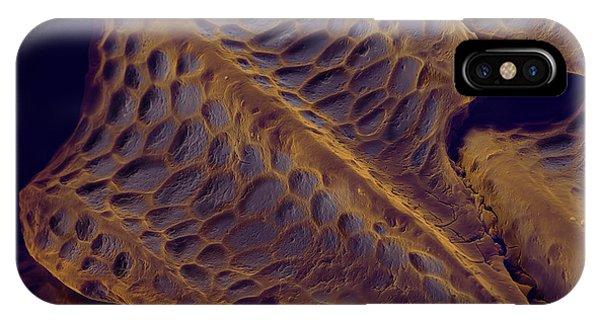 timeless design 38b98 0122b Shark Skin iPhone Cases   Fine Art America