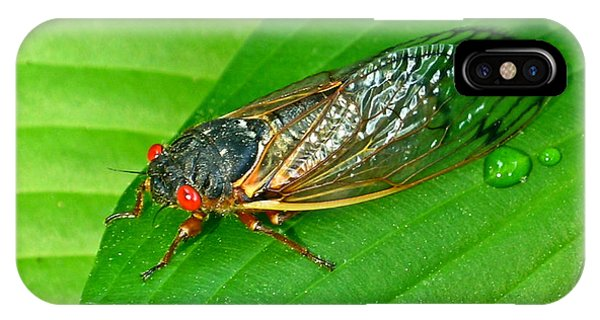 17 Year Periodical Cicada IPhone Case
