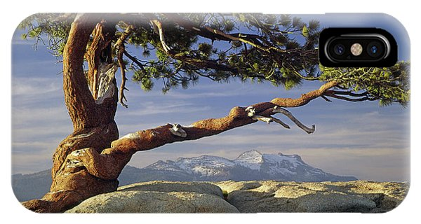 1m6701 Historic Jeffrey Pine Sentinel Dome Yosemite IPhone Case
