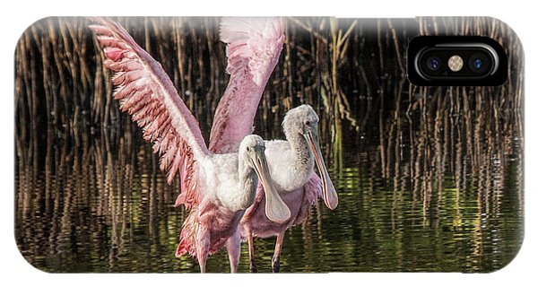 A Pair Of Spoonbills IPhone Case