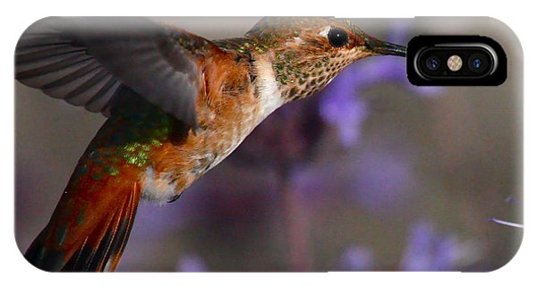 Allen's Hummingbird IPhone Case