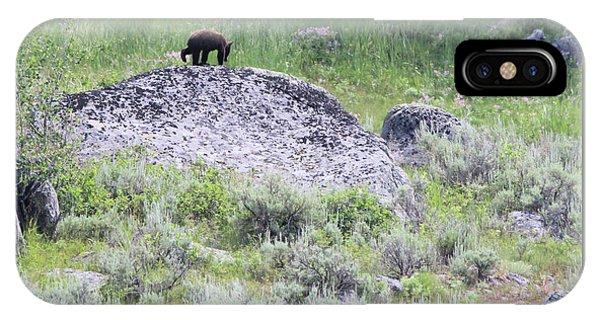 American Black Bear Yellowstone Usa IPhone Case