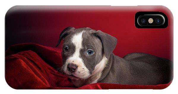 American Pitbull Puppy IPhone Case