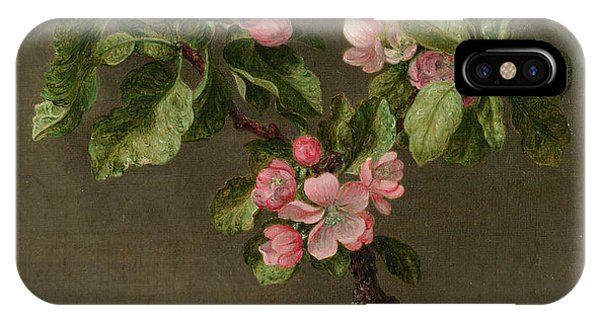 Humming Bird iPhone Case - Apple Blossoms by Martin Johnson Heade
