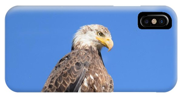 IPhone Case featuring the photograph Bald Eagle Juvenile Perched by Margarethe Binkley