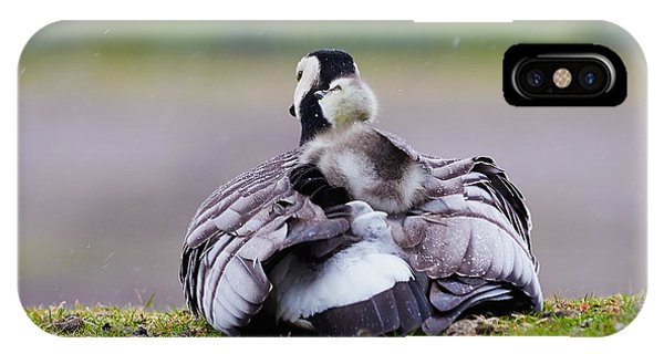 Barnacle Goose With Chick In The Rain IPhone Case