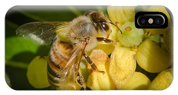 Bees Gathering From Pittosporum Flowers IPhone Case