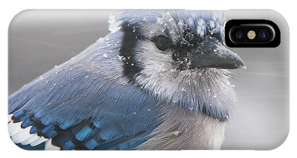 Blue Jay In A Blizzard IPhone Case
