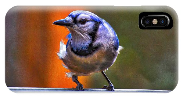 IPhone Case featuring the photograph Bluejay by Robert L Jackson