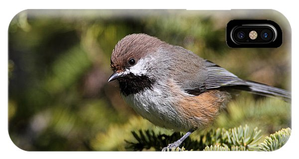 Boreal Chickadee IPhone Case