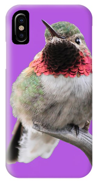 Humming Bird iPhone Case - Broad-tailed Hummingbird by Shane Bechler