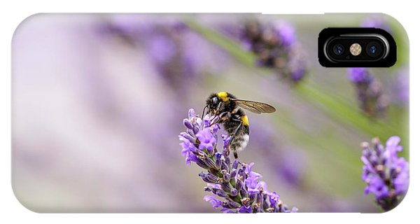 Lavender iPhone Case - Bumblebee And Lavender by Nailia Schwarz