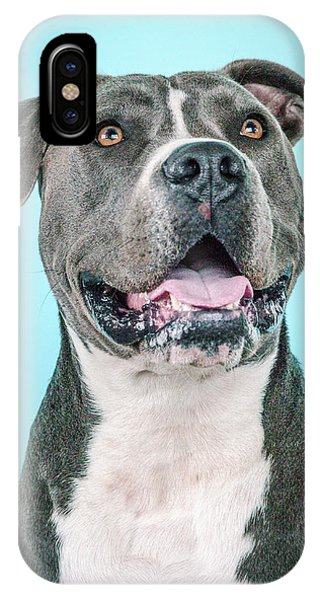 Pitbull iPhone Case - Buster by Pit Bull Headshots by Headshots Melrose
