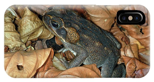 Cane Toad IPhone Case