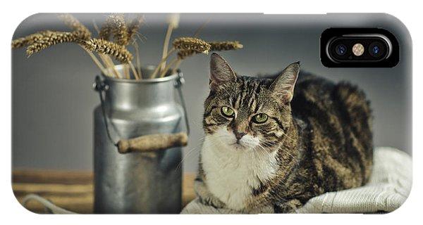 Kitten iPhone Case - Cat Portrait by Nailia Schwarz
