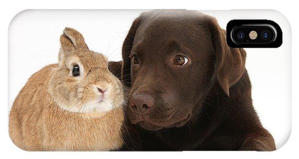 Chocolate Lab & Netherland-cross Rabbit IPhone Case