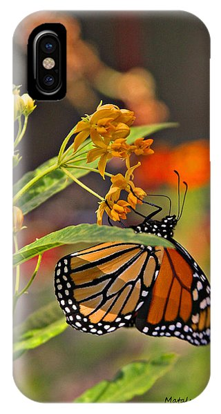 Clinging Butterfly IPhone Case