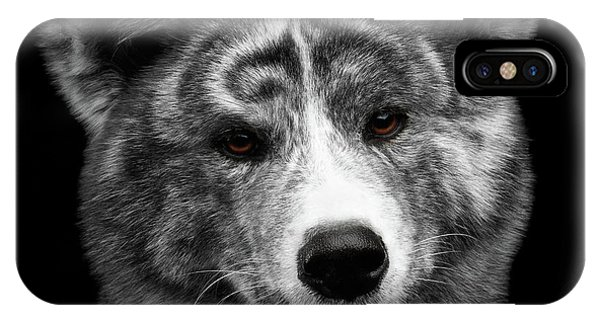 Dog iPhone X Case - Closeup Portrait Of Akita Inu Dog On Isolated Black Background by Sergey Taran