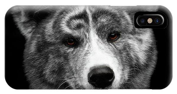 Dog iPhone X Case - Closeup Portrait Of Akita Inu Dog On Isolated Black Background by Sergey Taran