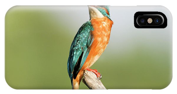 Common Kingfisher Alcedo Atthis IPhone Case
