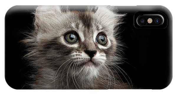 Cute Kitten iPhone Case - Cute American Curl Kitten With Twisted Ears Isolated Black Background by Sergey Taran