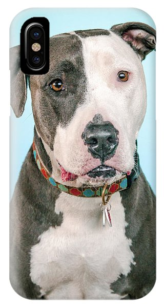 Pitbull iPhone Case - Cara by Pit Bull Headshots by Headshots Melrose
