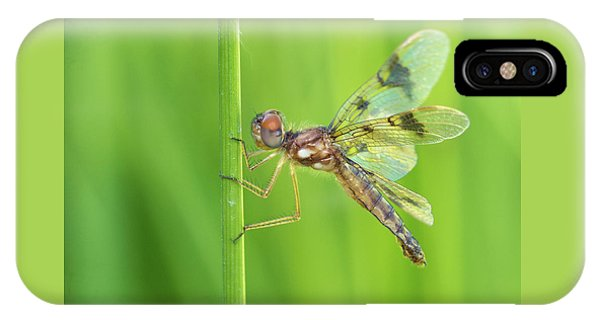 Eastern Amberwing IPhone Case