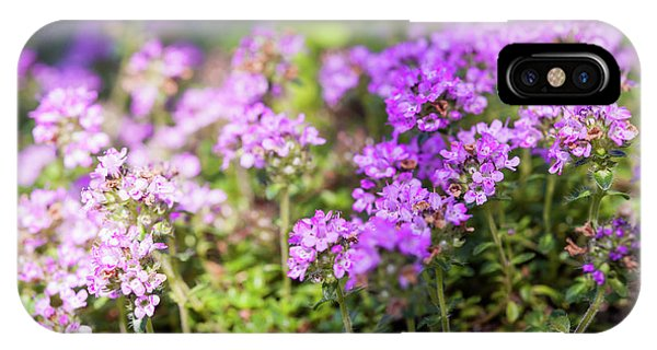 IPhone Case featuring the photograph Flowering Thyme by Elena Elisseeva