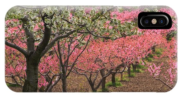 Fruit Orchard IPhone Case
