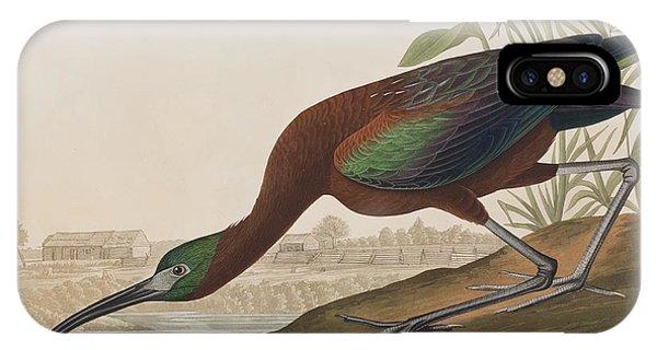 Ibis iPhone Case - Glossy Ibis by John James Audubon