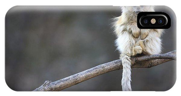 Golden Snub-nosed Monkey Rhinopithecus IPhone Case