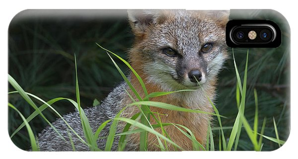 Gray Fox In The Grass IPhone Case