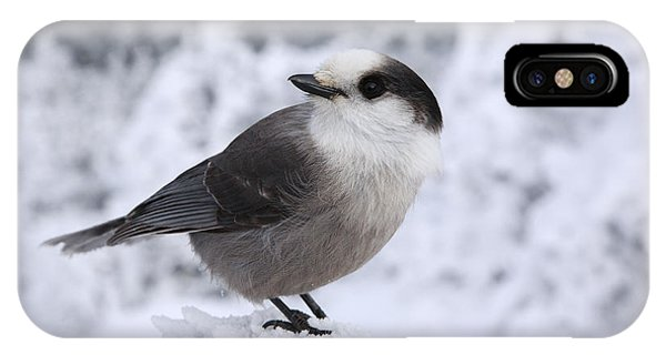 Gray Jay - White Mountains New Hampshire Usa IPhone Case