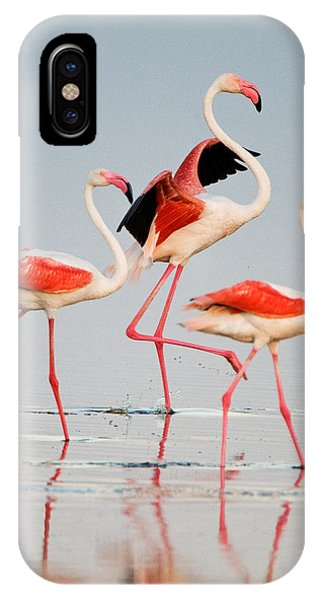 Greater Flamingos Phoenicopterus Roseus IPhone Case