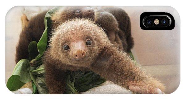 Mp iPhone Case - Hoffmanns Two-toed Sloth Choloepus by Suzi Eszterhas