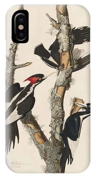 1851 iPhone X Case - Ivory-billed Woodpecker by Dreyer Wildlife Print Collections