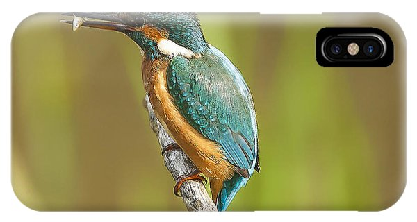 Kingfisher iPhone Case - Kingfisher by Paul Neville