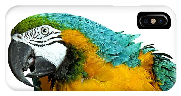 Macaw Bird IPhone Case