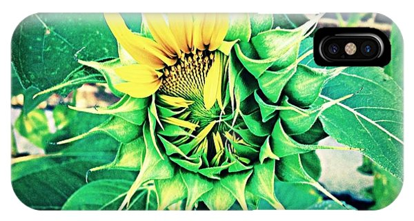Peeping Sunflower IPhone Case