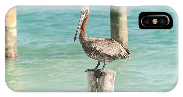 Pelican At Isla Mujeres IPhone Case