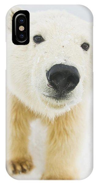 Winter iPhone Case - Polar Bear  Ursus Maritimus , Curious by Steven Kazlowski
