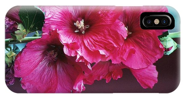 P's Hollyhocks IPhone Case