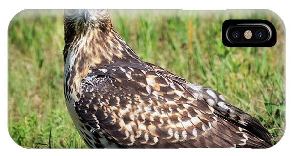 Red-tail Portrait IPhone Case