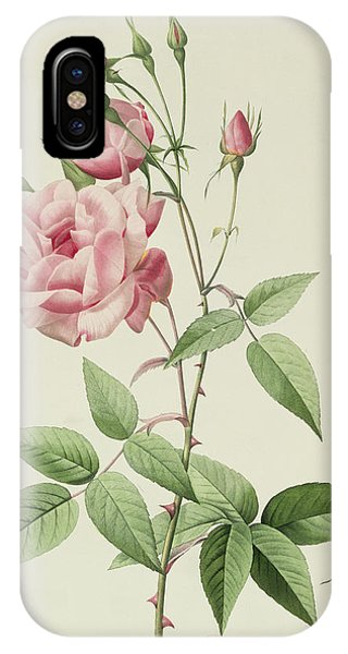 Redoute iPhone Case - Rosa Indica Vulgaris by Pierre Joseph Redoute