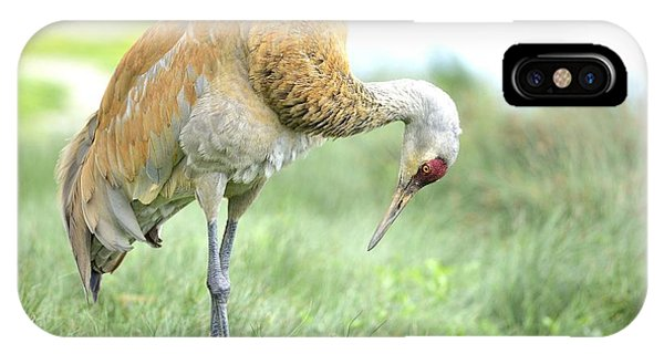 Sandhill Crane IPhone Case