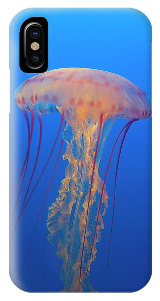 Monterey Bay Aquarium iPhone Case - Sea Nettle by Brian Knott Photography