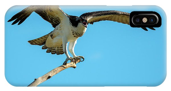 Ospreys iPhone Case - Stay Away by Mike Dawson