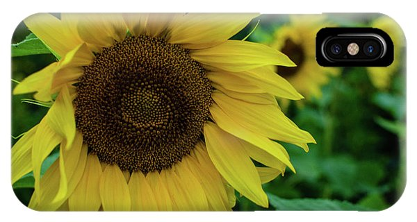 Sunflower Fields IPhone Case