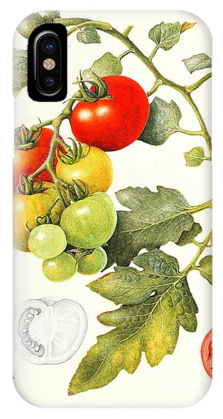 Organic Foods iPhone Case - Tomatoes by Margaret Ann Eden