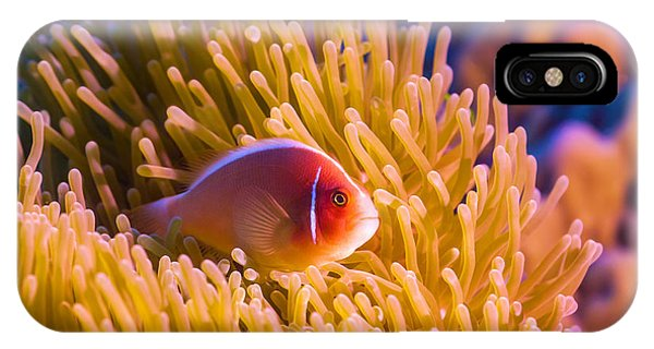 Tropical Fish Pink Clownfish IPhone Case